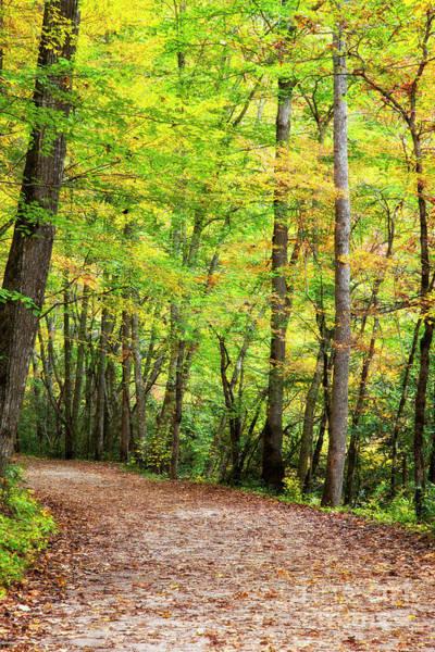 Photograph - North Carolina Hiking Trail by Jill Lang