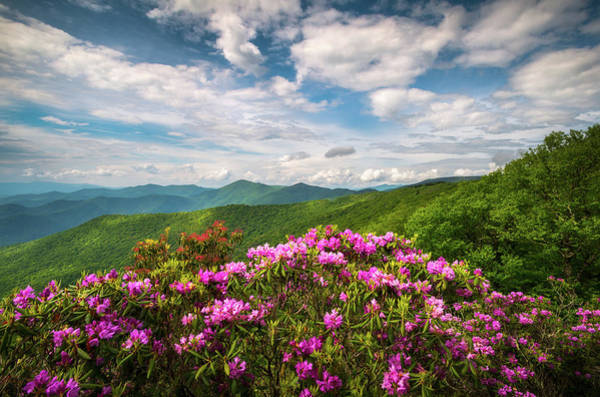 Wall Art - Photograph - North Carolina Spring Flowers Mountain Landscape Blue Ridge Parkway Asheville Nc by Dave Allen