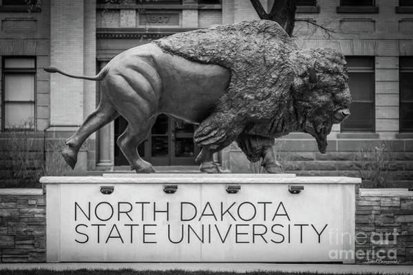Photograph - North Dakota State University Buffalo by University Icons