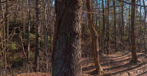 Photograph - North Georgia Mountains Pano by Herb Paynter