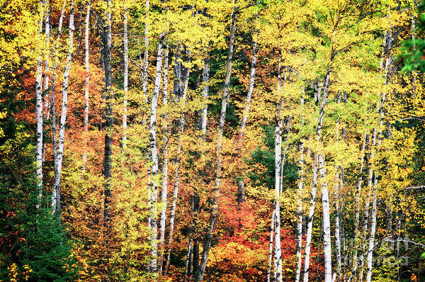 Photograph - North Woods Color by Scott Kemper