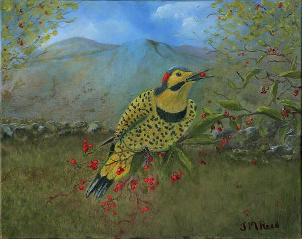 Northern Flicker Painting - Norther Flicker by Janet Reed