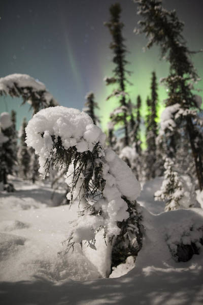 Photograph - Northern Accent by Ian Johnson