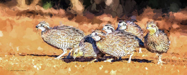 Wall Art - Digital Art - Northern Bobwhite Digital Art  by Carol Fox Henrichs