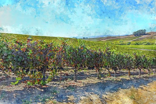 Photograph - Northern California Vineyard by Brandon Bourdages