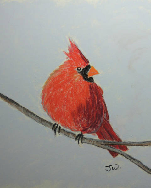 Painting - Northern Cardinal On Branch by Jayne Wilson