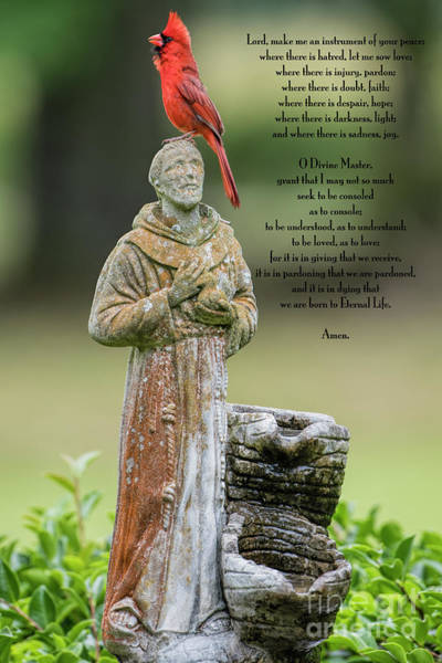 Wall Art - Photograph - Northern Cardinal With St. Francis Prayer by Bonnie Barry