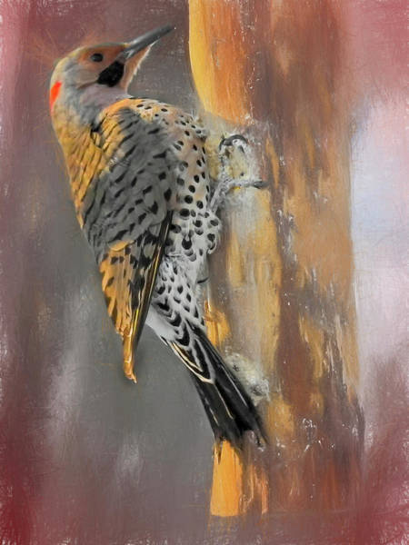 Photograph - Northern Flicker In Warm Morning Light. by Rusty R Smith