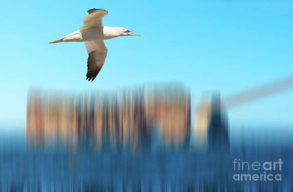 Photograph - Northern Gannet Over Perce Rock by Les Palenik