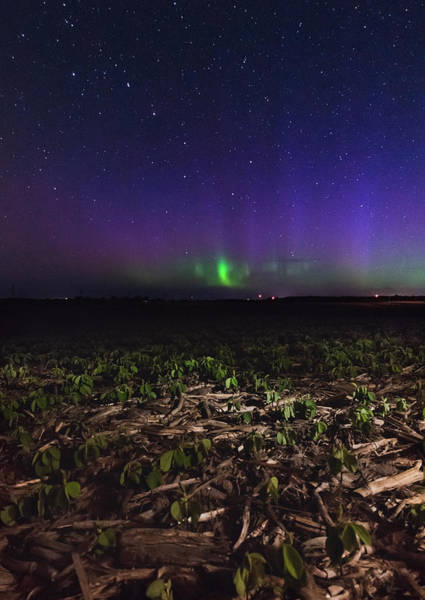 Wall Art - Photograph - Northern Lights Near Goderich  by Cale Best