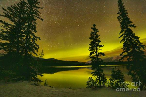 Photograph - Northern Lights Over The Pines by Adam Jewell