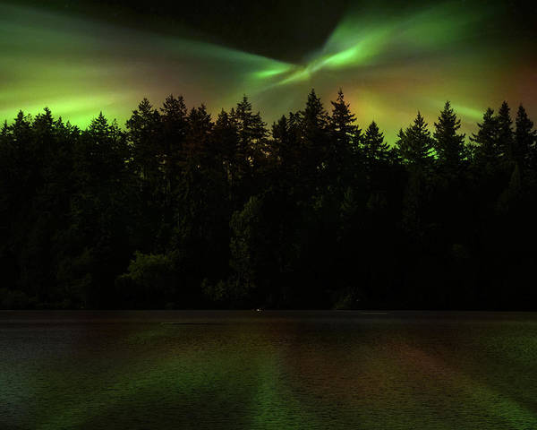 Photograph - Northern Lights Woodland  by Gigi Ebert