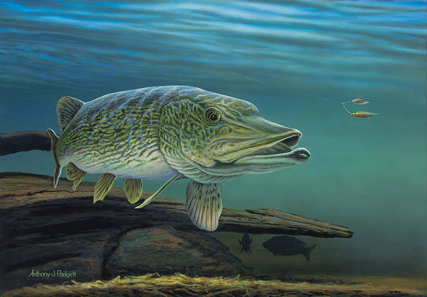 Painting - Northern Pike by Anthony J Padgett