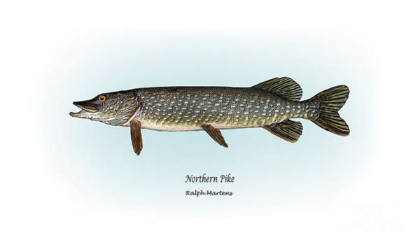 Angling Art Wall Art - Painting - Northern Pike by Ralph Martens