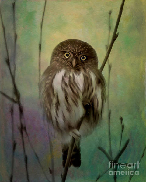 Photograph - Northern Pygmy Owl  by Beve Brown-Clark Photography