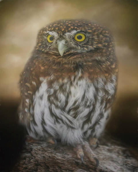 Digital Art - Northern Pygmy Owl by Teresa Wilson