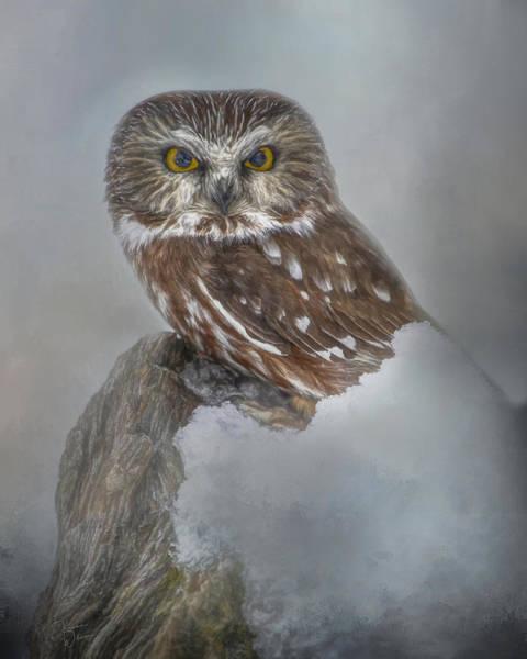 Digital Art - Northern Saw-whet Owl Portrait by Teresa Wilson