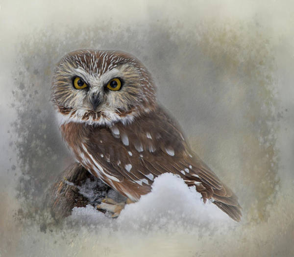 Digital Art - Northern Saw-whet Owl by Teresa Wilson