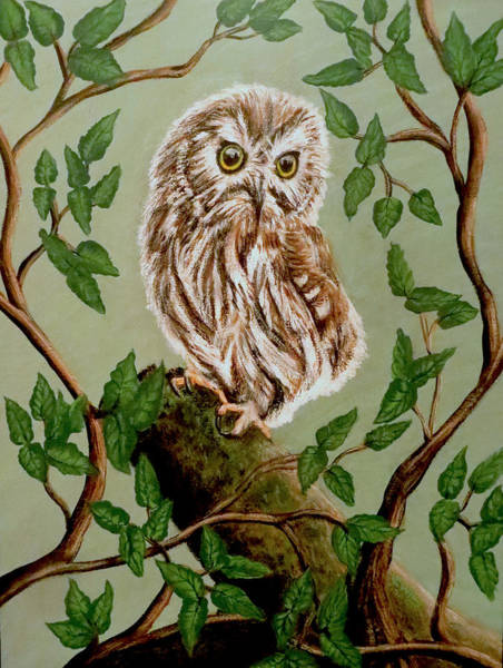 Painting - Northern Saw-whet Owl by Teresa Wing