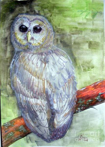 Acrilic Painting - Northern Spotted Owl by Ciocan Tudor-cosmin