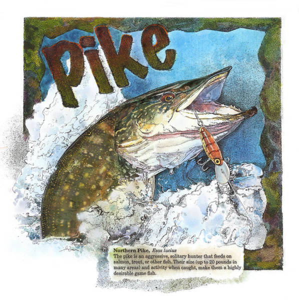 Northerrn Pike Art Print