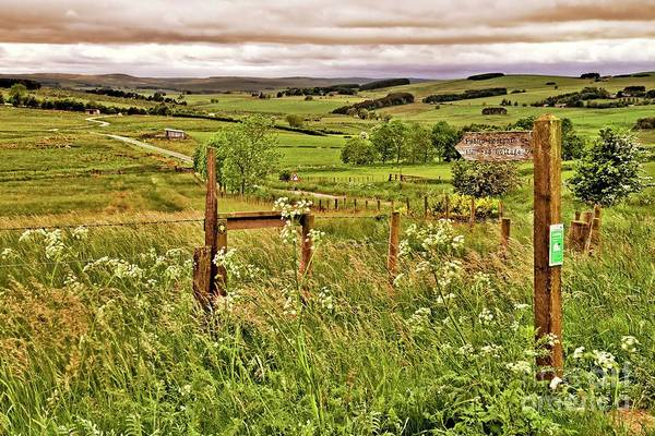 Photograph - Northumberland Landscape by Martyn Arnold