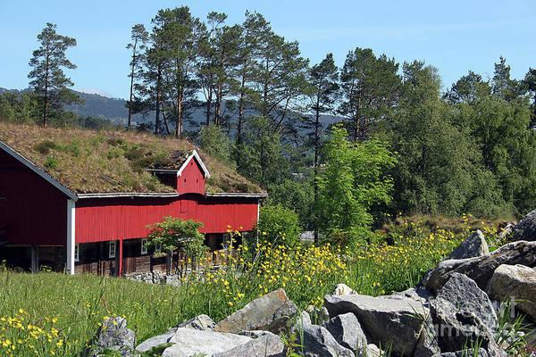 Photograph - Norwegian Woods by PJ Boylan