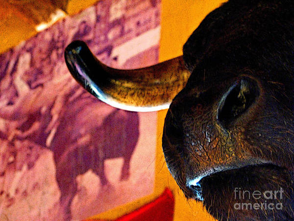 Matador Photograph - Nose Of The Bull by Mexicolors Art Photography