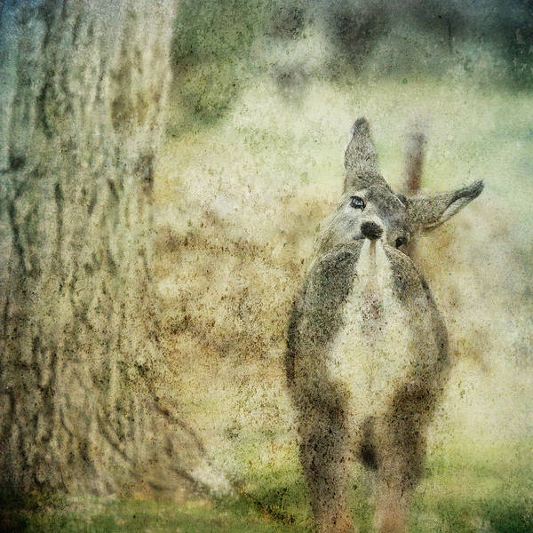 Photograph - Nose To Tail by Belinda Greb