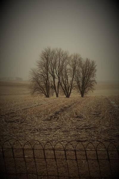 Wall Art - Photograph - Nostalgia Trees by Toni Grote