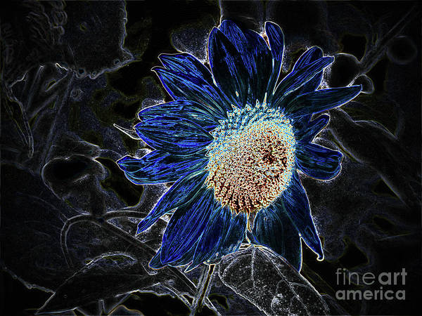 Photograph - Not A Sunflower Now by Lance Sheridan-Peel