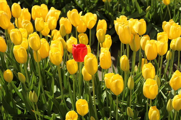 Photograph - Not Afraid To Stand Out In The Crowd by Sherri Keene