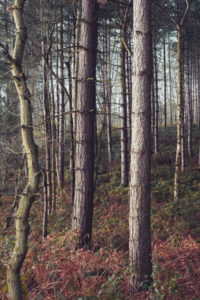 Nottingham Photograph - Not All Trees Grow Straight by Chris Dale