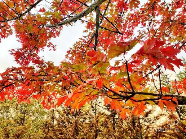 Photograph - Not Ready To Fall by Rachel Hannah