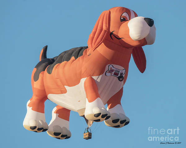 Photograph - Nothin But A Hound Dog by Steven Natanson