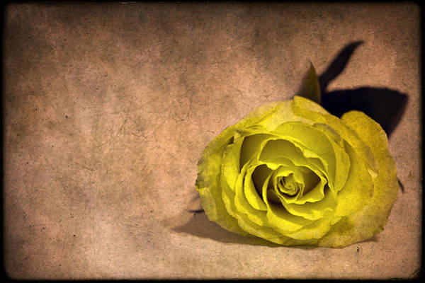 Single Flower Photograph - Nothing Left To Say by Evelina Kremsdorf