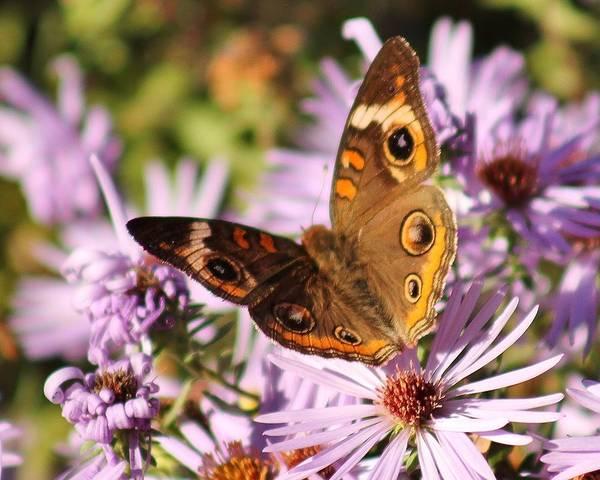 Wall Art - Photograph - November Butterfly  by Valia Bradshaw