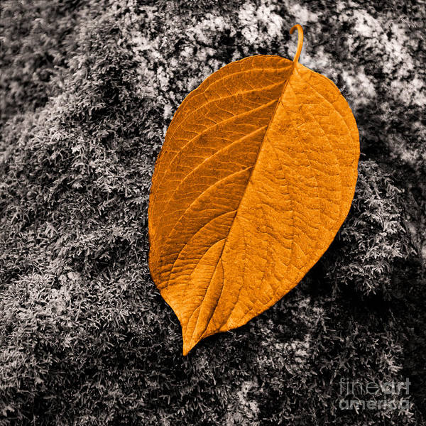 Photograph - November Leaf by Ari Salmela