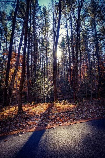 Photograph - November Light by Kendall McKernon
