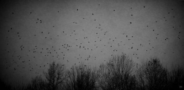 Photograph - November Murder by John Meader