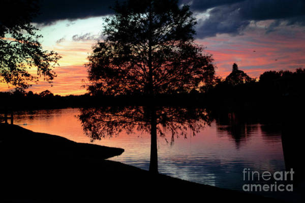 Photograph - November Sunset by Judy Hall-Folde