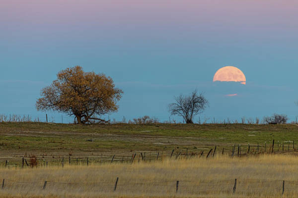 Photograph - November Supermoon Rising  by James BO Insogna