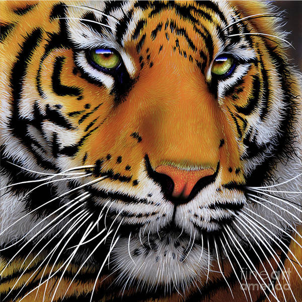 Wall Art - Painting - November Tiger by Jurek Zamoyski