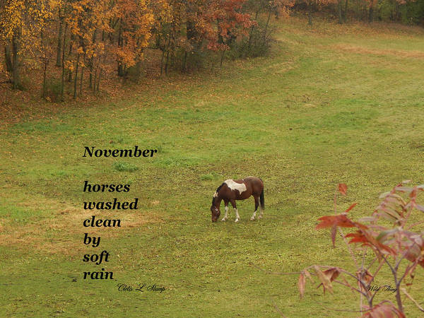 Photograph - November by Wild Thing
