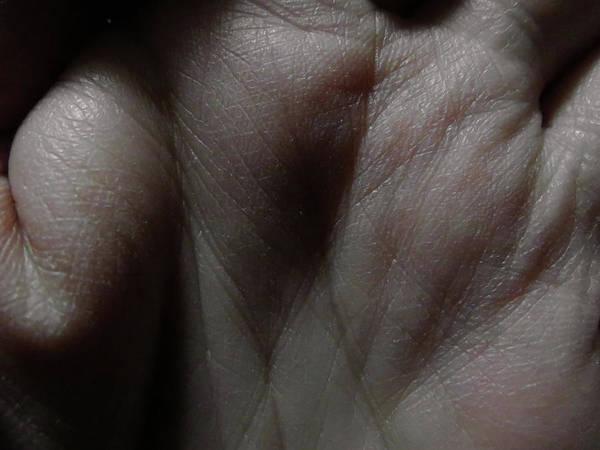 Photograph - Nude Palm 2 by Attila Meszlenyi