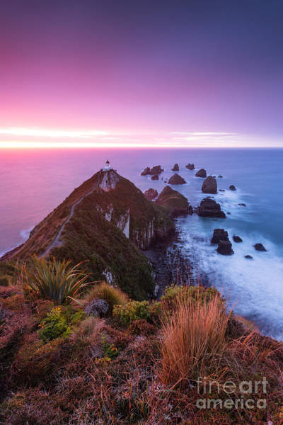 Wall Art - Photograph - Nugget Point Lighthouse At Dawn - Otago - New Zealand by Matteo Colombo