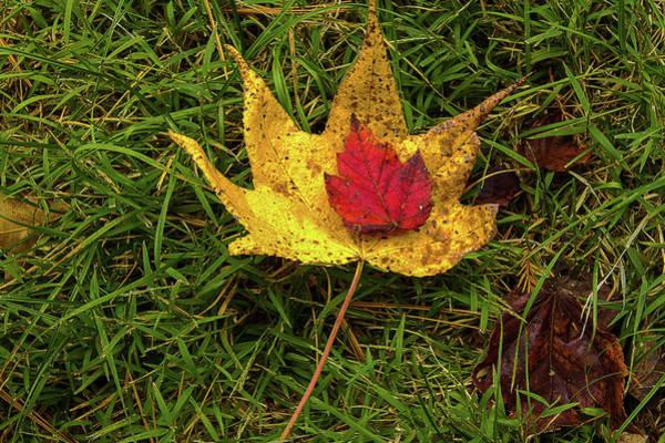 Photograph - Nurturing Nature by Jeff Kurtz