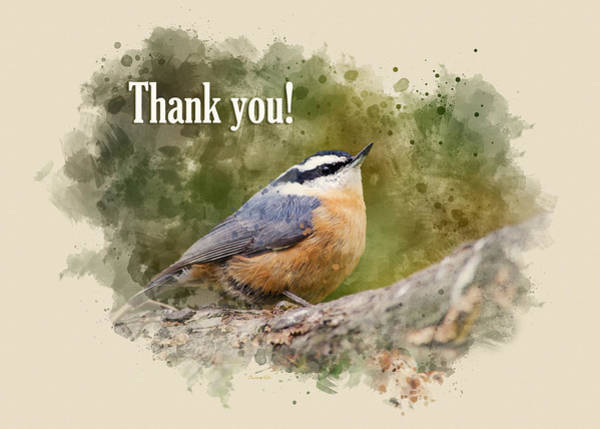 Mixed Media - Nuthatch Watercolor Thank You Card by Christina Rollo