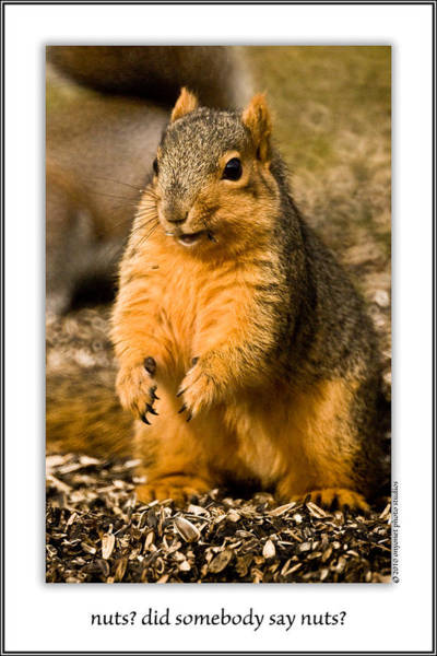 Photograph - Nuts? Did Somebody Say Nuts? by  Onyonet  Photo Studios
