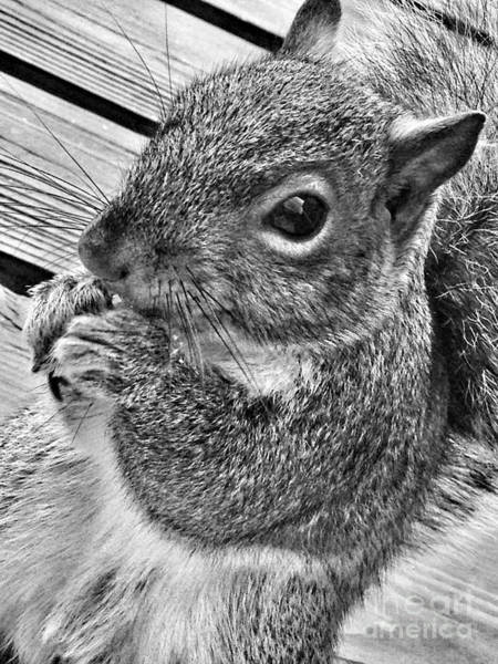 Photograph - Nuts For You by Chris Scroggins